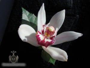 Weiße Orchidee Boutonniere