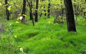 Khortytsa Landscape by movaxdx