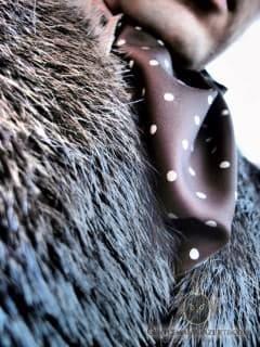 Beaver Fur Detail