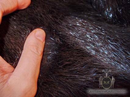 Beaver Under Hair