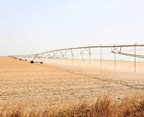 Albini Cotton Fields in Egypt