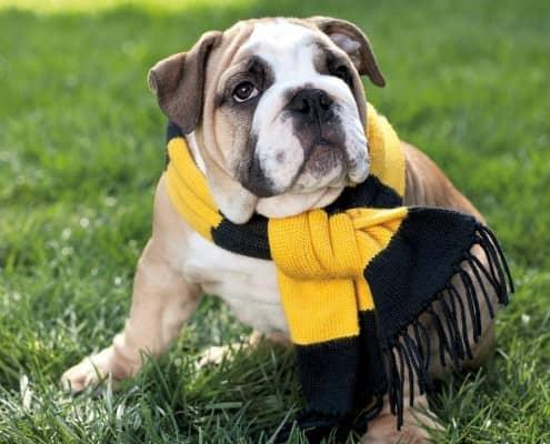 Ralph Lauren for Bulldogs
