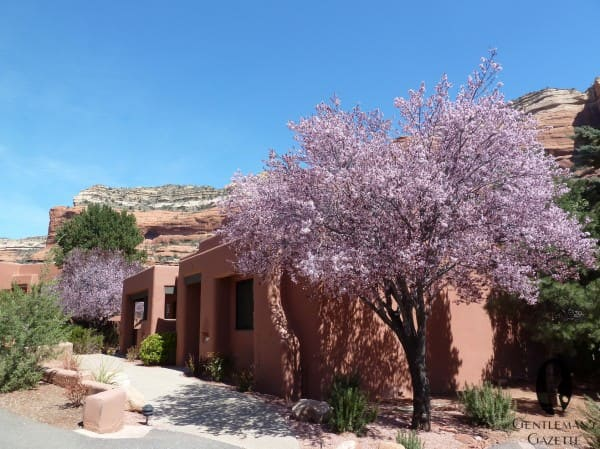 Enchantment Resort bungalows & blossoms