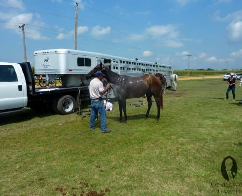 On hot days, the horses deserve a cold shower between the chukkers