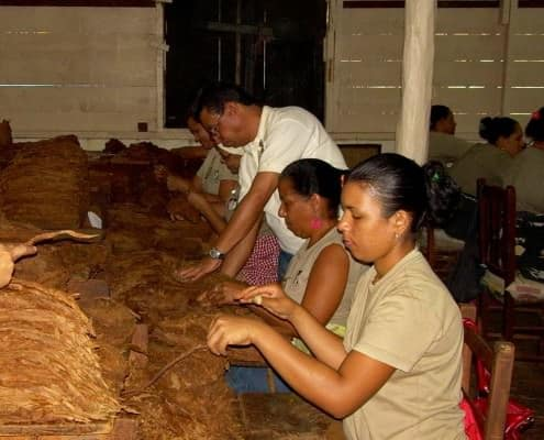 Cigar Making in the Dominican Republic