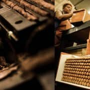 Dominican Cigar Guide