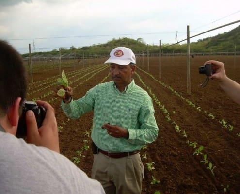 Tobacco plantation in the Dominican Republic