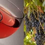 Rose Wine Guiide