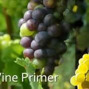 White Wine Primer