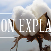 cotton explained